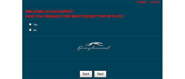 Greyhound Survey Button